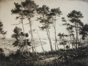 257-21-Les grands pins sur l'Odet